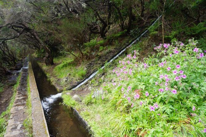 Une levada, canal d'irrigation typique de Madère, qui sert de chemin de randonnée